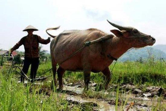 Fullverdig Luang Prabang Rural Farm...