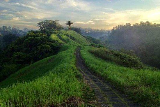Privat tur: Ubud Rice Paddies Trek...