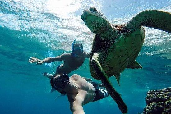 Vieques Snorkeling Tour from San Juan