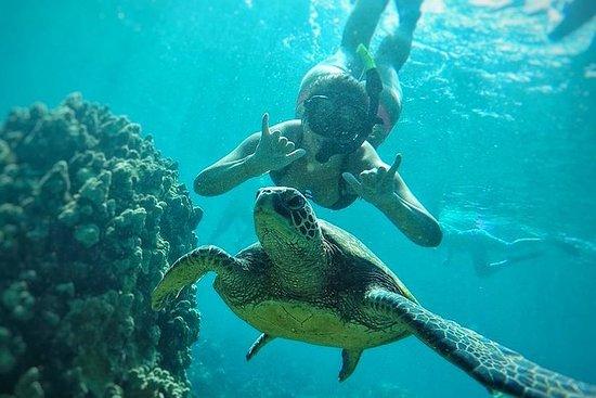 Sortie snorkeling à l'ouest de Maui