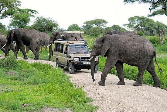 Fulldags Safari til Tarangire...