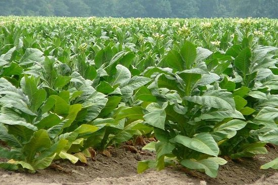 Tobacco Route Full Day Tour from Salta