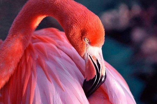 Celestun National Park och Flamingos ...