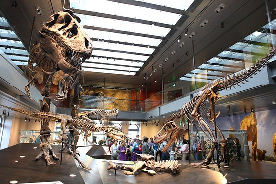Opptak: Natural History Museum of Los...