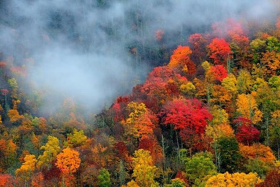 Smoky Mountain Trees of Many Colors...