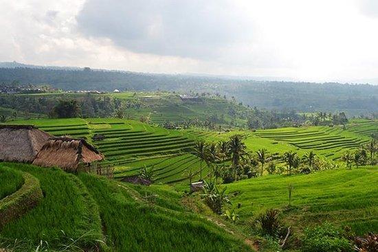 Tour Privado: Templo de Bali e...