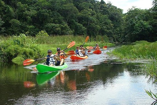 Lake Gatun乘船游览包括皮划艇和午餐