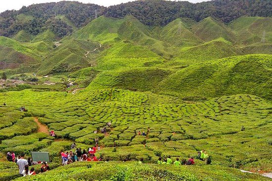 Private Full Day Cameron Highlands...
