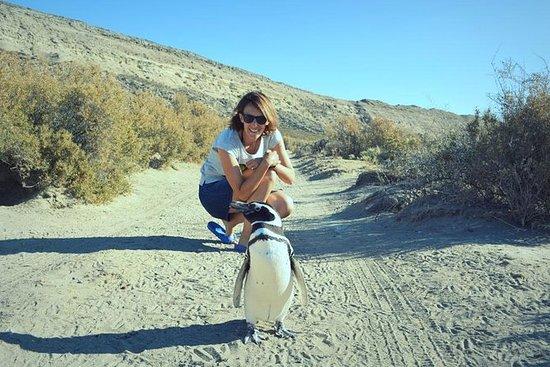 Patagonia Ranch and El Pedral Penguins...