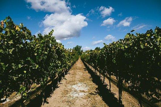 Excursão pela região vinícola de...