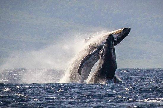 Maui Ka'anapali Beach Whale-Watching...
