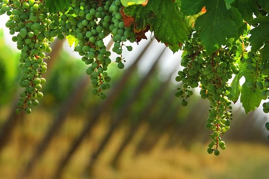 Franciacorta Weinprobe und Shopping...
