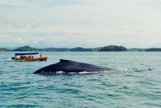 Walbeobachtung und Inseltour im Golf...
