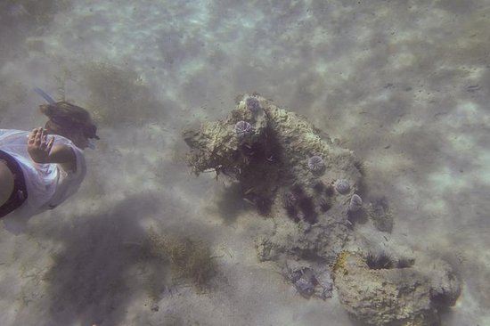 Carriacou snorkeltrip