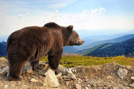 Bear Sanctuary och Bran Castle med en ...