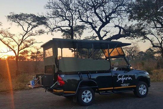 Premium Kruger Park Afternoon Sunset