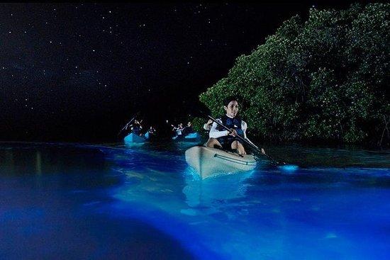 梅里特岛野生动物保护区的生物发光夜皮划艇之旅