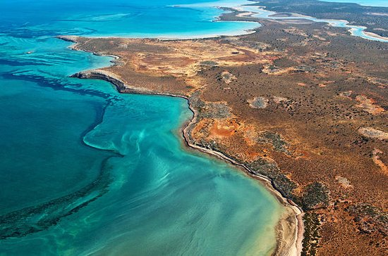 Half-Day Abrolhos Island Discovery...