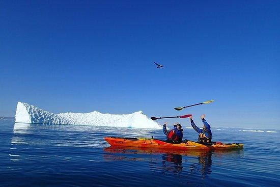 Kajak morgen tur i Ilulissat