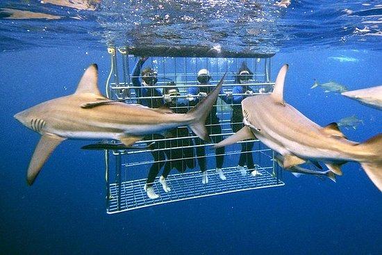 Excursão de mergulho em gaiola de...
