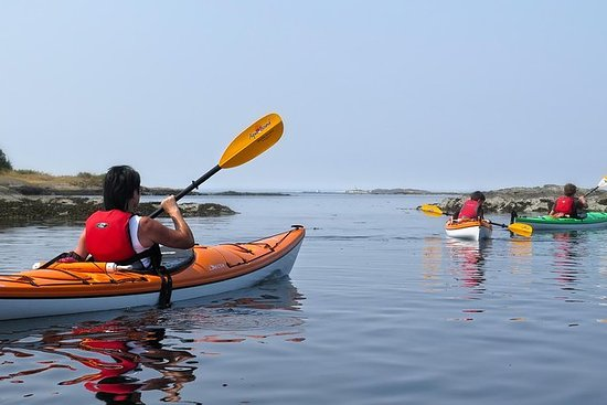Excursion en kayak sur le rivage dans...