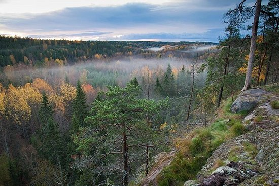 Finske Søer og Skove (fra Helsinki)