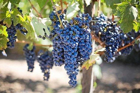 Willamette Valley Wine Tasting Tour...