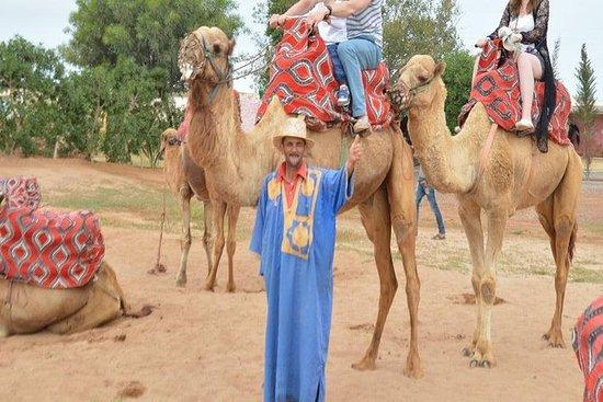 Kamelkjøring i Agadir