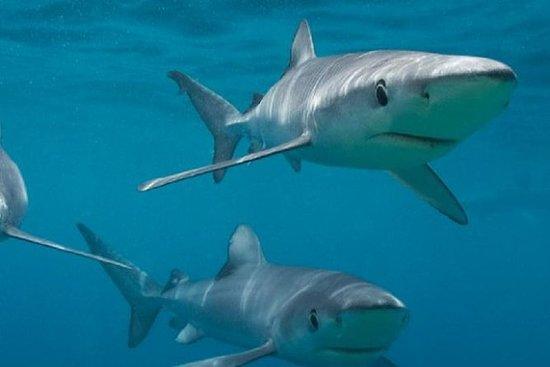 来自开普敦的甘斯拜私人沙滩上的鲨鱼笼