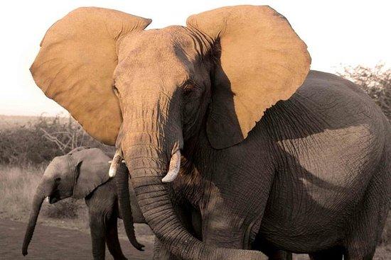 Safari ecológico en Pilanesbserg con...