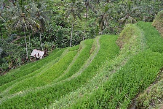 Excursiones y columpios en Ubud