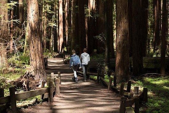 Redwoods, California Coast & Sausalito...