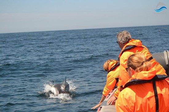 Osservazione dei delfini da Portimao