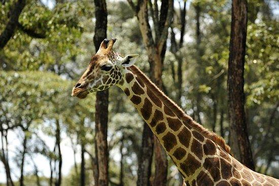 Day-Trip til Giraffe Center...