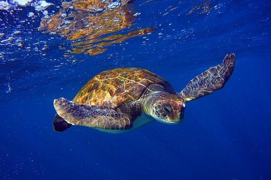 Tour de plongée en apnée avec tortues...