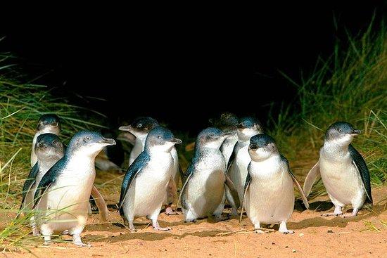 1天企鹅目的地 - 墨尔本到菲利普岛(返回)
