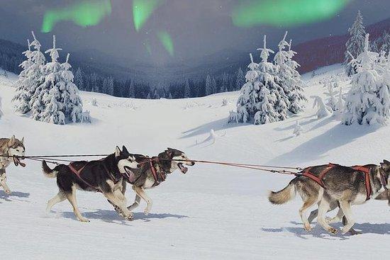 Noorderlicht jagen met Husky
