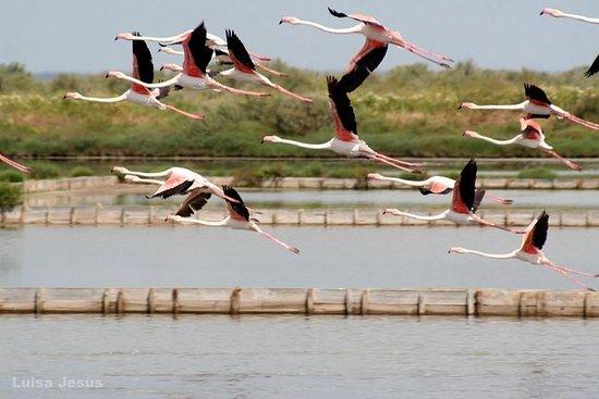 自然保护区卡斯特罗马里姆 - 半日游