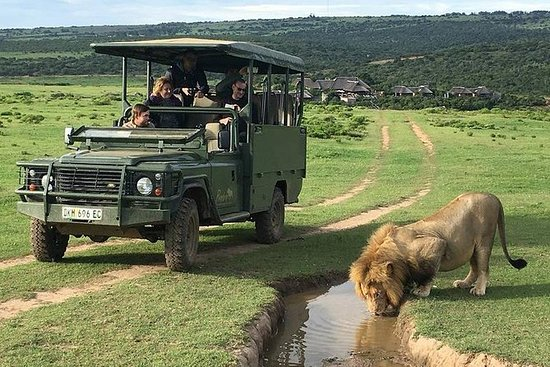Day Safari at Pumba Private Game...