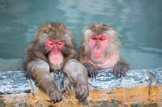 1-Day Snow Monkey Tour with...
