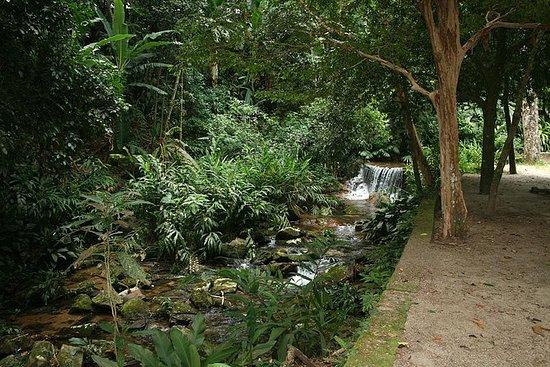 Visite du jardin botanique et de la...