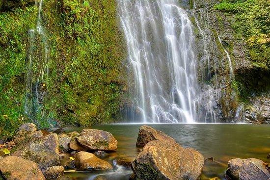 Östra Maui vattenfall och regnskog ...