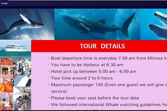 Whale Watching Tour Sri Lanka