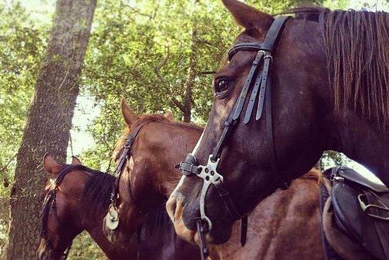 HALF DAY HORSEBACK WINE TOUR