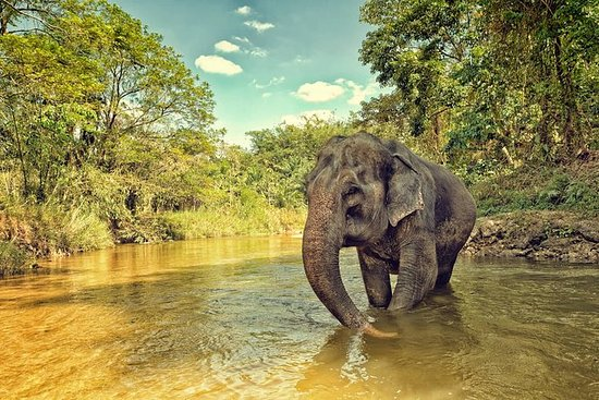 Ethical Elephant Jungle Sanctuary ...