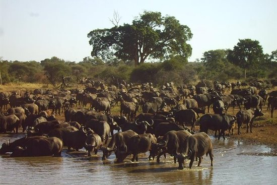 4 dager Kruger nasjonalpark tur