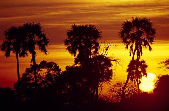 2-dagars privat Safari till Ruaha ...