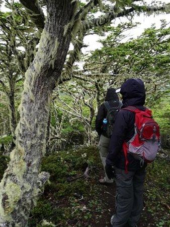 リザーバの森林Magallanesで半日のハイキング