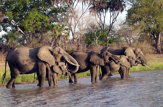 10-dagars Tanzanias södra ...