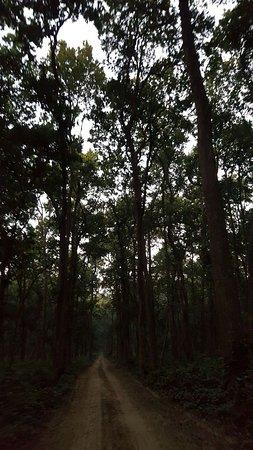 Dudhwa National Park, Indien: Jungle